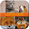 Animal Quiz Game App by JingjaiNa