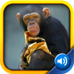 Toddler Tapping Zoo App by Tipitap