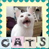 Cats sounds App by VolgaApps