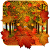 Fall Live Wallpaper app by App Basic