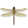 Dragonfly App by Dmitsoft