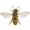 Bee App by Dmitsoft