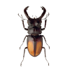 Beetle App by Dmitsoft