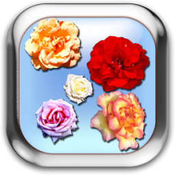 Roses of Rome Live Wallpaper App by 1473labs