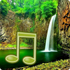 Jungle Sounds - Nature Sounds App by Zodinplex
