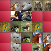 Memory Game - Animals App by Cooler