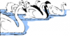 +animal+bird+swans+in+water+ clipart