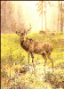 +animal+Cervidae+large+buck+by+water+morning+ clipart
