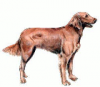 +animal+canine+canid+German+Pointer+ clipart