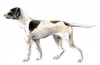 +animal+canine+canid+Pointer+ clipart
