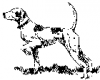 +animal+canine+canid+pointer+3+ clipart