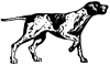 +animal+canine+canid+pointer+drawing+ clipart