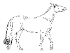 +animal+mammal+horse+walking+open+mouth+sketch+ clipart