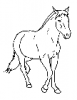 +animal+mammal+horse+walking+toward+ clipart