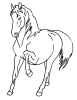 +animal+ungulate+mammal+Equidae+horse+leg+up+ clipart