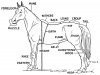 +animal+ungulate+mammal+Equidae+horse+parts+diagram+ clipart