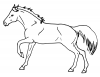 +animal+ungulate+mammal+Equidae+horse+profile+2+ clipart