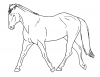 +animal+ungulate+mammal+Equidae+horse+trot+sketch+ clipart