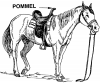 +animal+ungulate+mammal+Equidae+pommel+ clipart