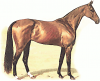 +animal+ungulate+mammal+Equidae+thoroughbred+ clipart