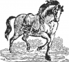 +animal+ungulate+mammal+Equidae+woodcut+horse+ clipart