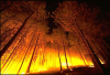 +climate+weather+clime+atmosphere+weather+scene+forest+fire+ clipart